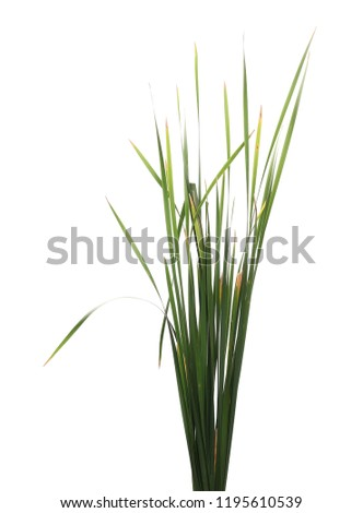 Cane, reed leaves, isolated on white background #1195610539