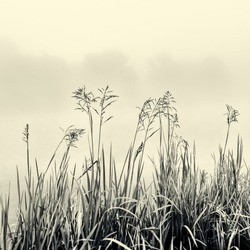 Cane silhouette on fog - minimalism concept in black and white