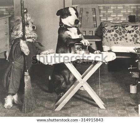 Canine chores