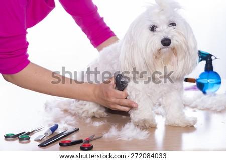 Canine hair court.