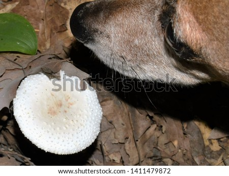 CANINE 1. Of, relating to, or characteristic of the canids. 2. Of, relating to, or being one of the pointed conical teeth located between the incisors and the first bicuspids. Canidae. Canine. Dog. #1411479872