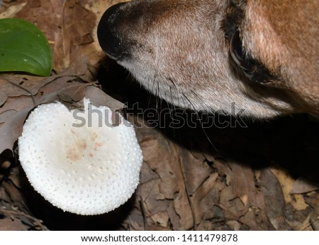 CANINE 1. Of, relating to, or characteristic of the canids. 2. Of, relating to, or being one of the pointed conical teeth located between the incisors and the first bicuspids. Canidae. Canine. Dog. #1411479878
