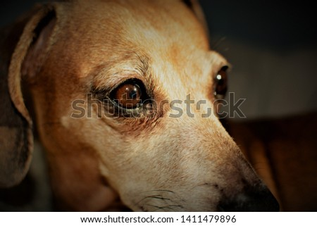 CANINE 1. Of, relating to, or characteristic of the canids. 2. Of, relating to, or being one of the pointed conical teeth located between the incisors and the first bicuspids. Canidae. Canine. Dog. #1411479896
