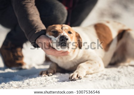 Canine Rehabilitation Therapist for dog rehabilitation program. Young dog trainer playing with a dog with a behavioral problem helping him