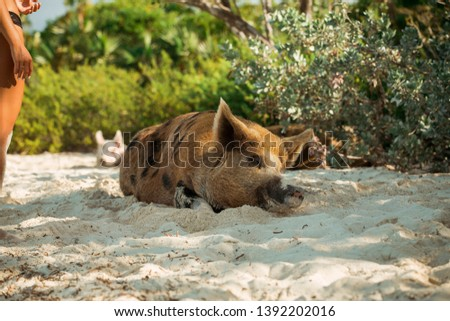 Canine Wild dog Dhole Forest Photo #1392202016