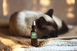 Canister of CBD hemp oil for domestic cat, selective focus