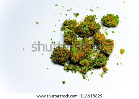Cannabis 1. High grade marijuana against a white background.