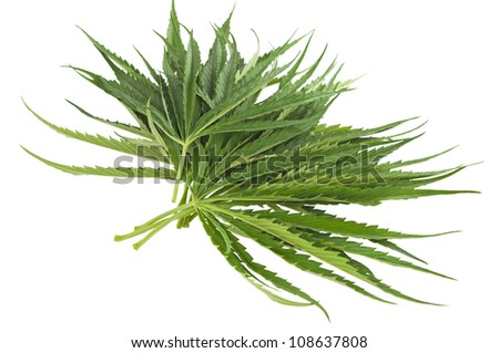 cannabis isolated on white background