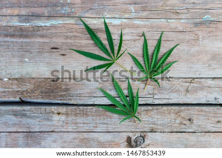 Cannabis leaves on wooden background. #1467853439