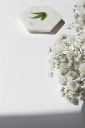 Cannabis plant leaf on a white natural marble stone on a white, clean background with a white flowers. Fresh  artsy, summer garden sunny, relaxing weekend concept.
