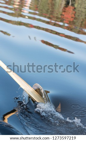 Canoe paddle dips in the water to take a stroke.