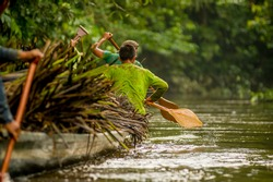 Canoes in the Yasuni national park Ecuador, carring straw plant