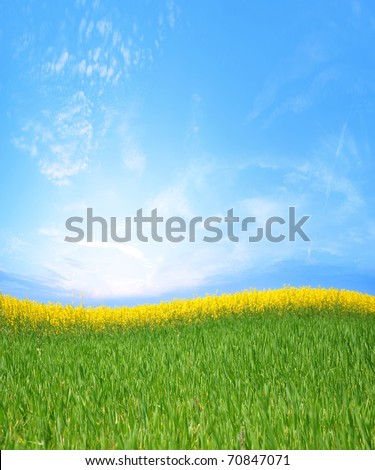 canola fields and green grass