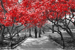 Canopy of red trees in surreal black and white landscape scene in Central Park, New York City