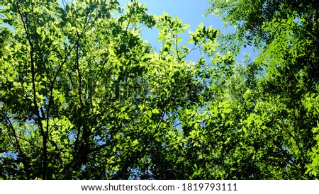 Canopy views from the trail path along Elm Creek Stock photo ©