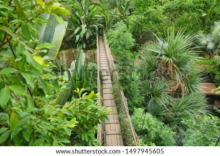 Canopy walk in top of tropical rainforest