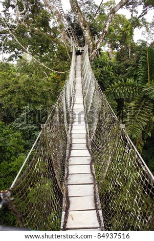 Canopy walkway strung between two rainforest trees in the Ecuadorian Amazon