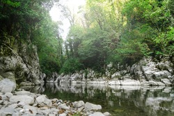 Canyon, mountain river flows between the White Rocks, subtropical forest landscape. Yew-boxwood grove, Sochi National Park