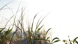 Cape Cod summer beaches and landscape photos