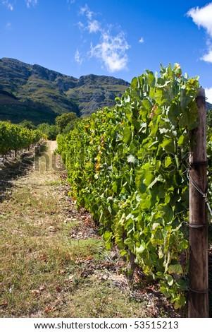 Cape Town Stellenbosch South Africa Winelands