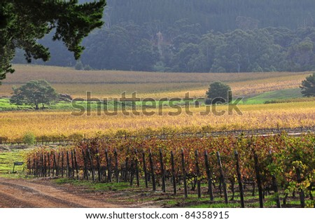Cape Town Vineyards