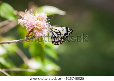 stock-photo-caper-white-butterfly-restin