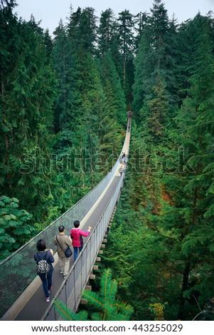 Capilano Suspension Bridge in Vancouver, Canada. #443255029