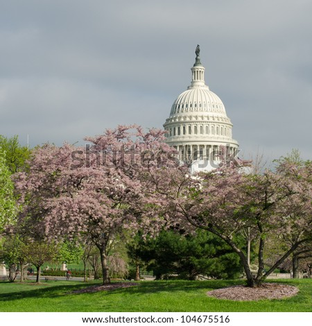 Capitol building among blossoming trees in spring, Washington DC