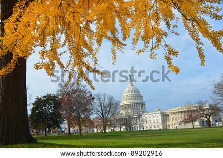 Capitol Building in Autumn with yellow tree branches, Washington DC USA