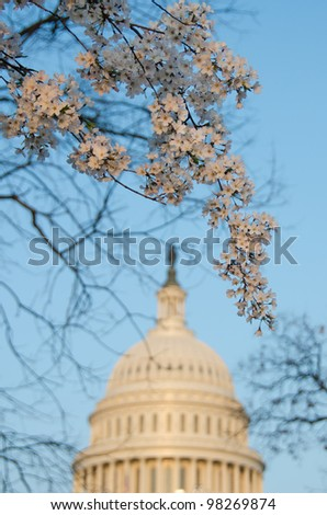 Capitol building in spring during cherry blossom festival. Washington DC United States