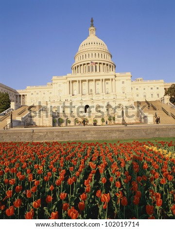 Capitol building with bed of tulips
