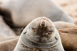 caption of a happy seal making funny faces