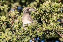 caption of portrait of african bird in nature