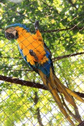 captive bird. Ara parrot. psittacidae. blue-yellow parrot macaw. macaw parrot sitting on a cage net. captive bird