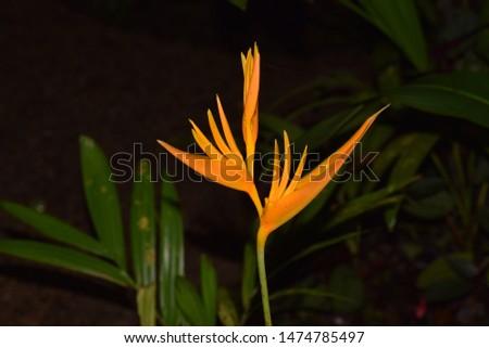 Capturing Australian flora and fauna