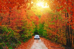 Car driving on the road in the forest in autumn season. Autumn colors bring the forest to life. Autumn landscape in the deep forest. Autumn view on a sunny day. Domanic, Kutahya, Turkey.