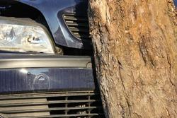 car hit a tree