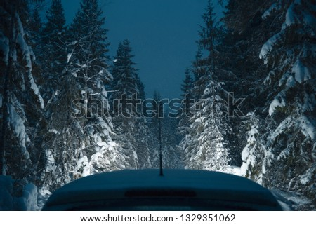 Car in the winter pine forest. Night time