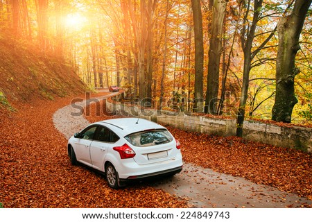 car on a forest path #224849743