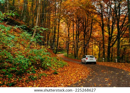 car on a forest path #225268627