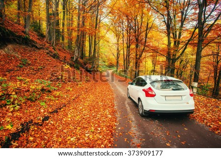 car on a forest path #373909177