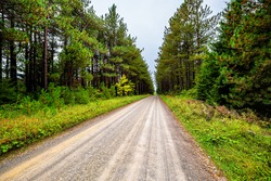 Car point of view wide angle road through spruce pine tree forest lining dirt path in Dolly Sods, West Virginia autumn fall season