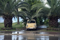 car under palms.  yellow car beetle stands under green palm trees on the seashore after rain in a wet parking lot with puddles.