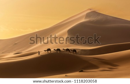 Caravan of camels in the Sahara desert during desert storm, Morocco #1118203058