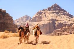 Caravan of camels walking in the Wadi Rum desert in Jordan on a sunny day