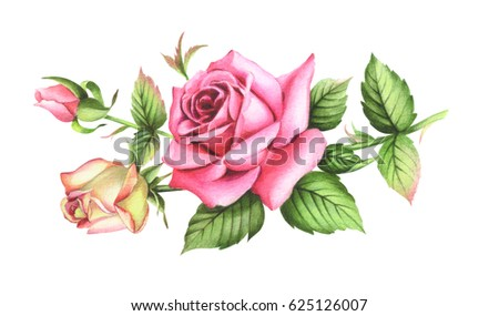 Card template with watercolor roses. Raster illustration. Clipping path included. Illustration for greeting cards, invitations, and other printing projects..High resolution.