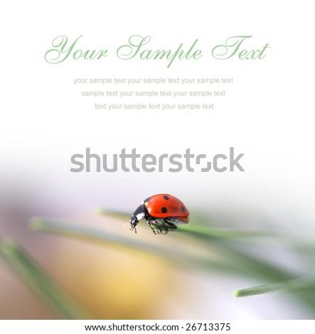 card with ladybug