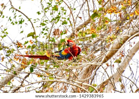 cardinal in tree, photo as a background
