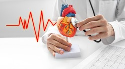 Cardiologist use a stethoscope for the act of listening to sounds beat a heart anatomical model. Concept of heart diseases, cardiovascular system, and medical treatment
