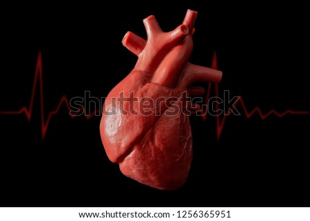 Cardiology, organ transplant and cardiovascular medicine concept with a plastic medical model of a heart isolated on black background with high contrast lighting and a a pulse or heart rhythm